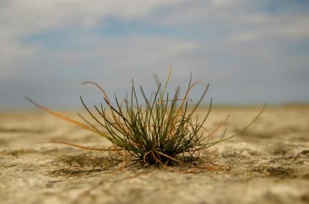 grass-776288_1920