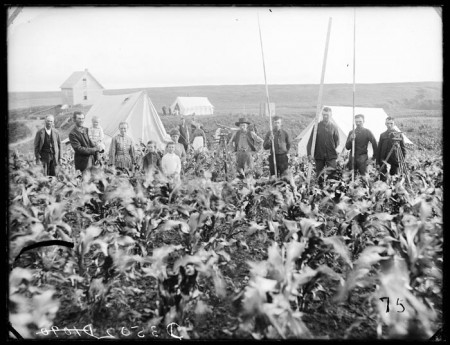 Burlington-Railroad-surveyors-west-of-Sargent,-Nebraska,-working-through-a-man's-cornfield-